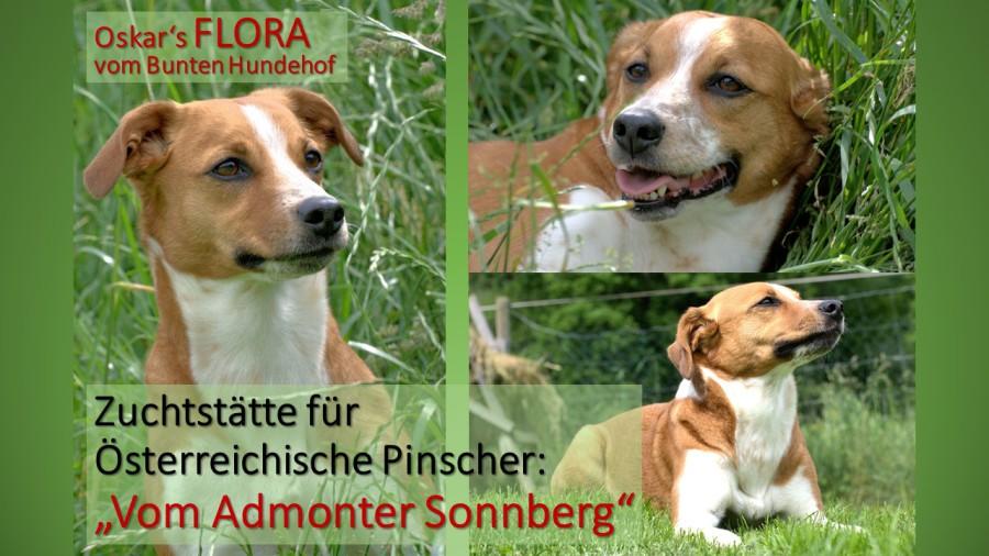 hunde züchter österreich